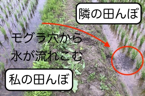 【カワニナ大発生、原因は水にあり】